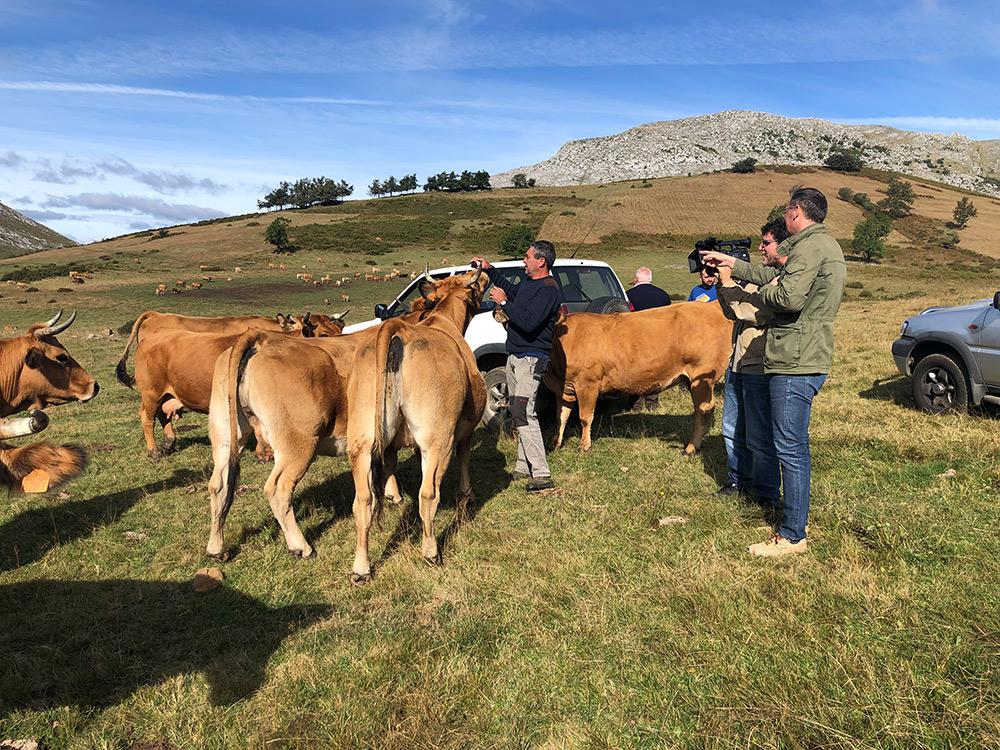 """""""Ternera Asturiana: la mejor carne de Europa"""" se convierte en un mensaje millonario."""