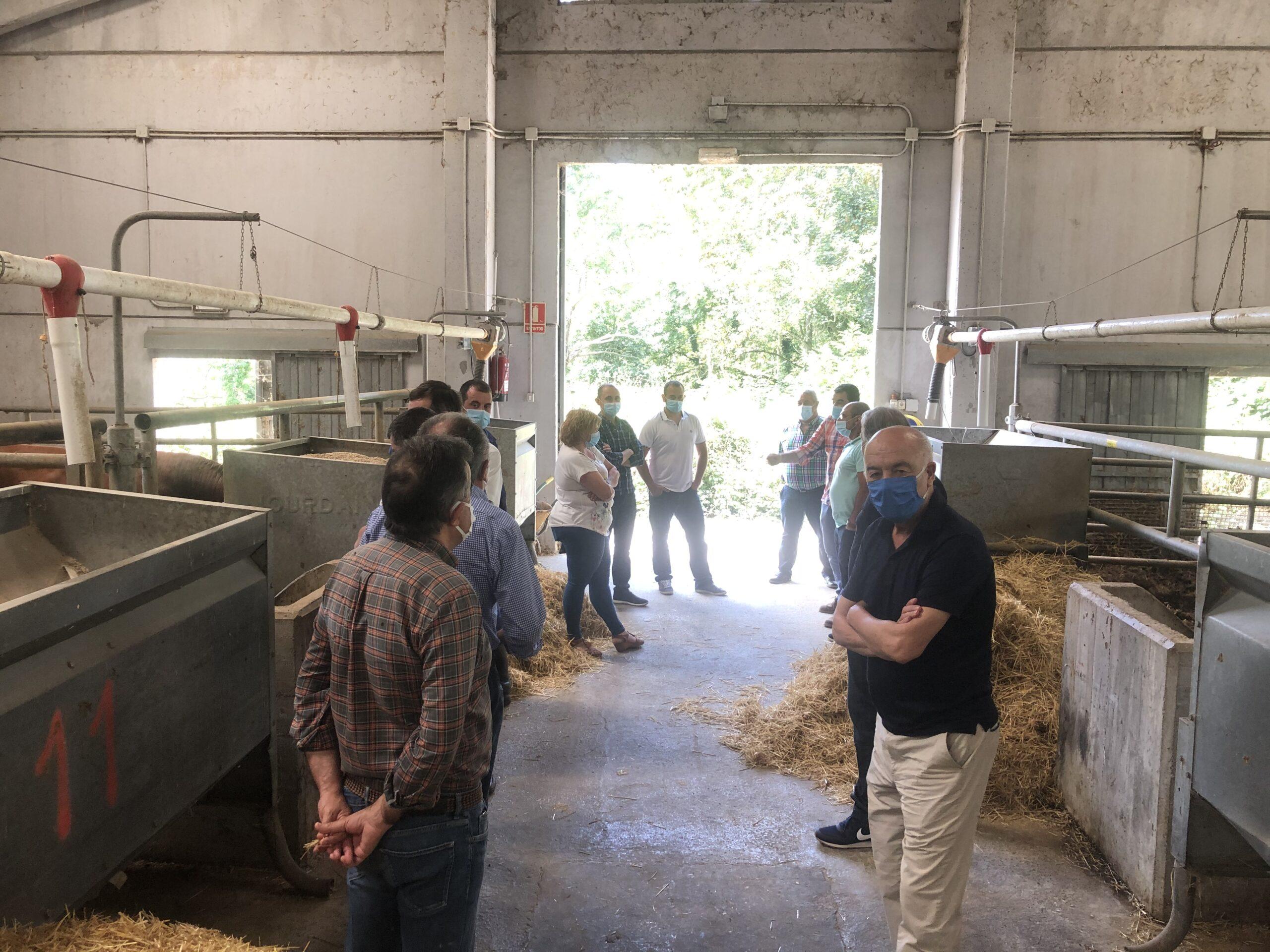 La ganadería de vacuno asturiana, unida por el futuro del sector.