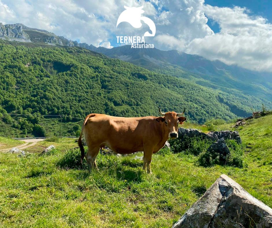 El Consejo Regulador de la I.G.P. Ternera Asturiana abordará un Análisis de Ciclo de Vida de sus productos.